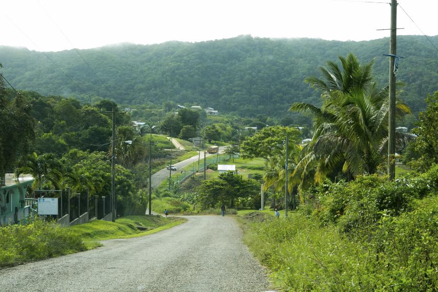 road through a jungle